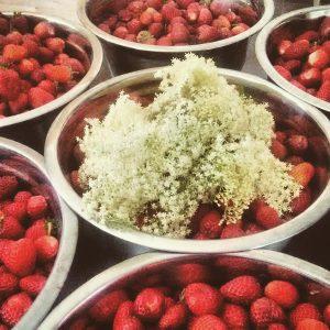 strawberries with elderflowers