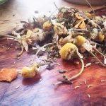 loose leaf stomach soothing tea