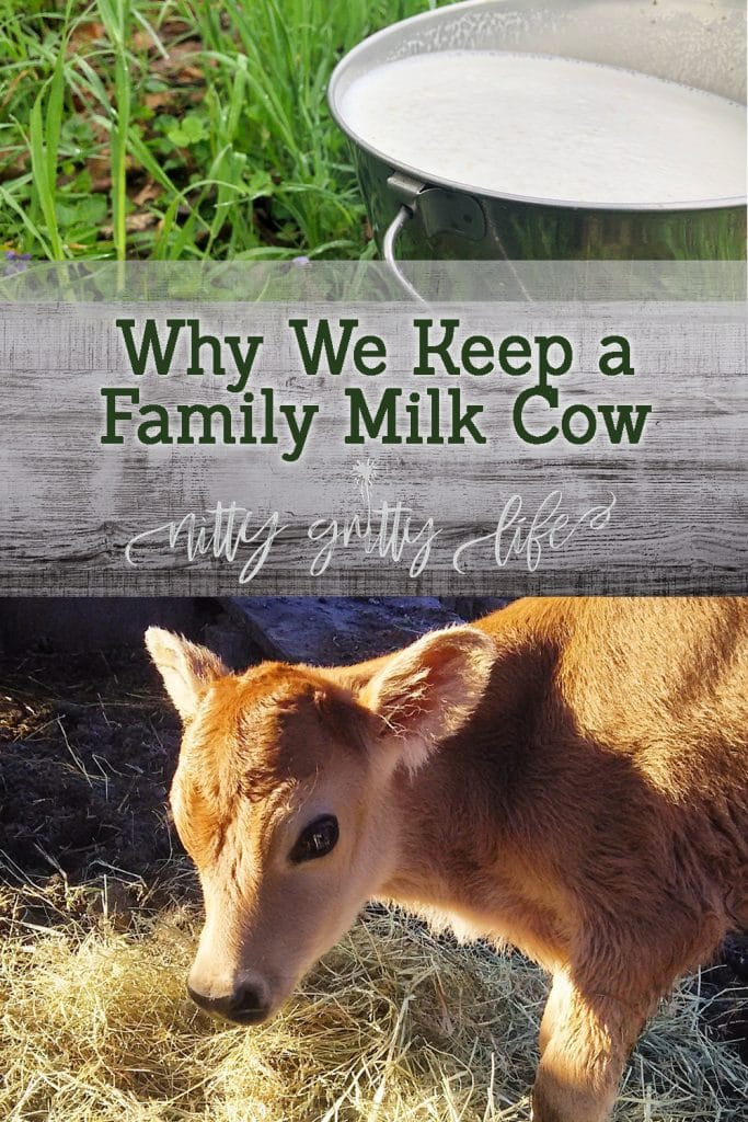 Family Milk Cow