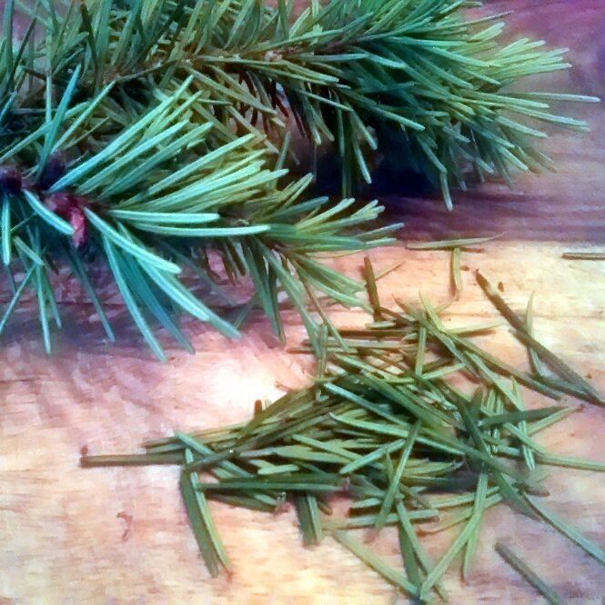 Douglas fir needles