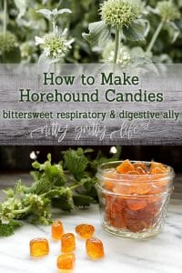 How to Make Bittersweet Horehound Candies a respiratory and digestive ally
