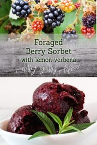 Foraged Berry Sorbet