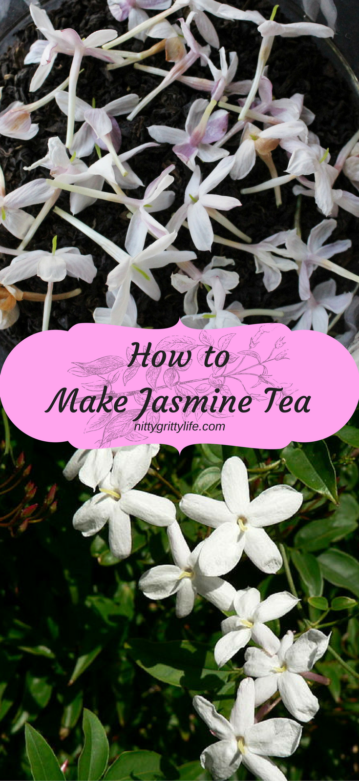 How To Make Exotically Scented Jasmine Tea At Home