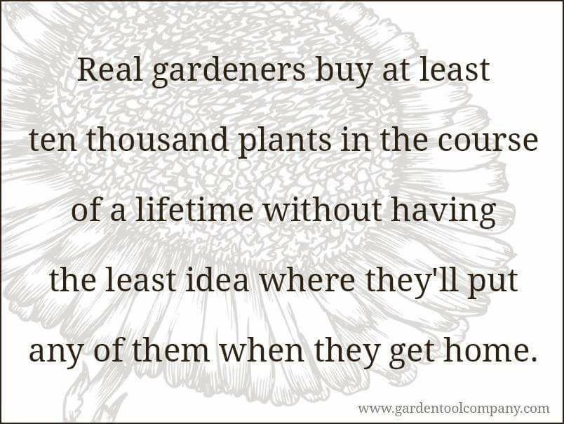 10 medicinal tree and shrubs gardening meme