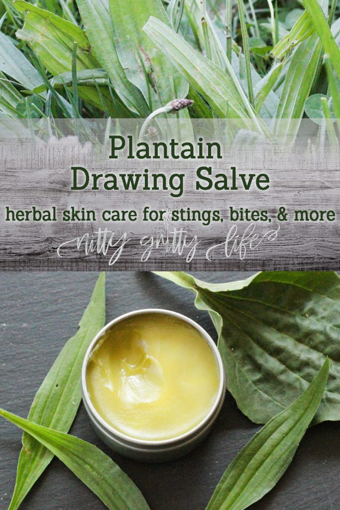 Plantain Herbal Drawing Salve