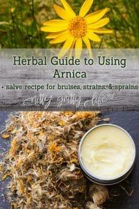Arnica Salve Recipe