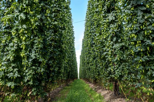 hop farm