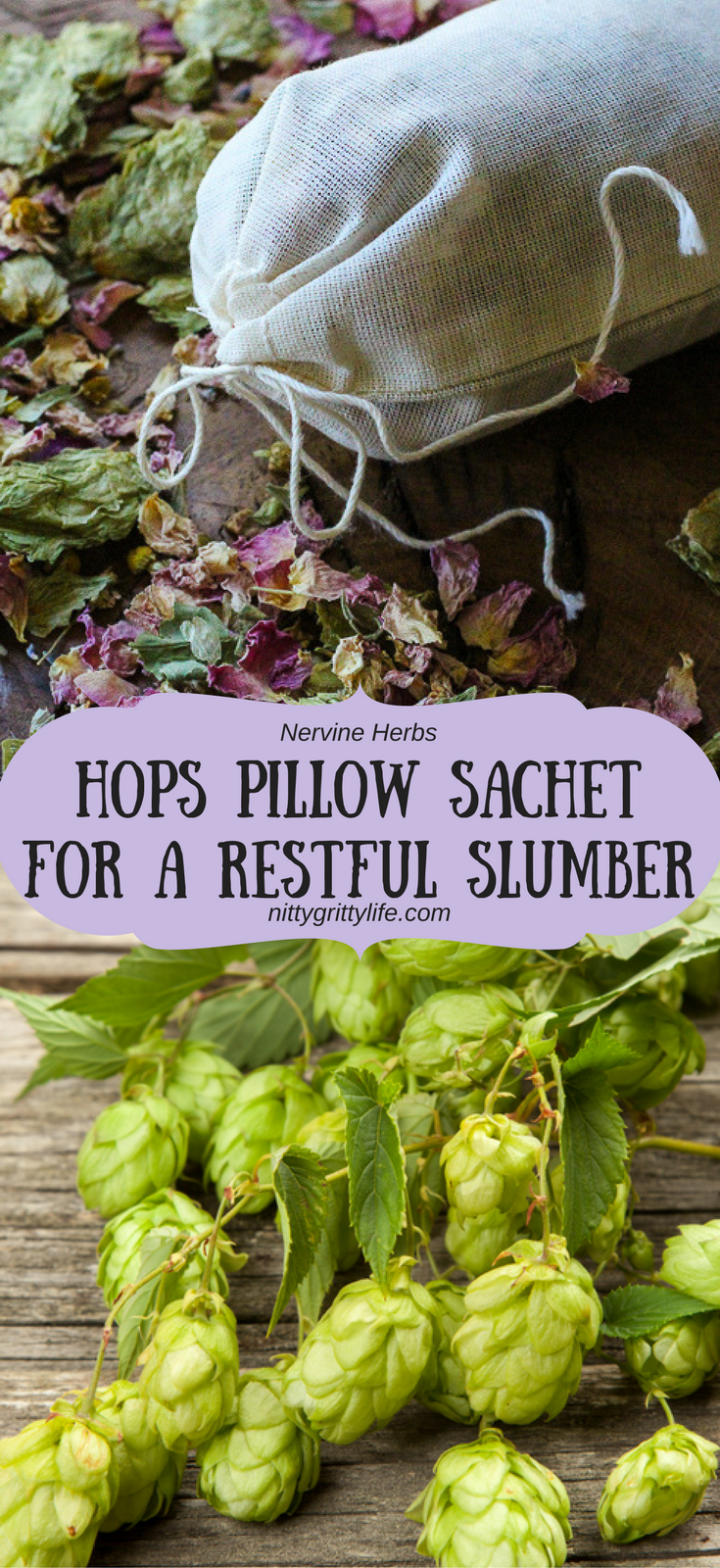 Hops are not just for beer making.  Actually, it is a wonderful, relaxing herb for those with nervous tension, anxiety, and insomnia.  Make a hops pillow sachet to promote a peaceful and restorative slumber.