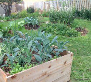 micro-farm raised beds