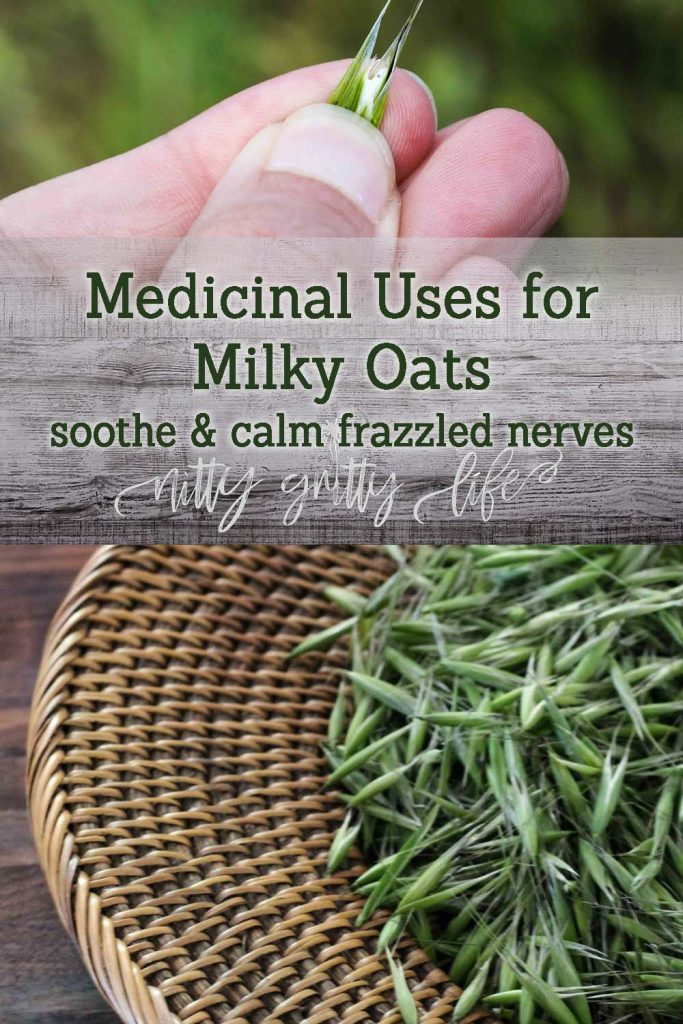 Medicinal Uses for Milky Oats