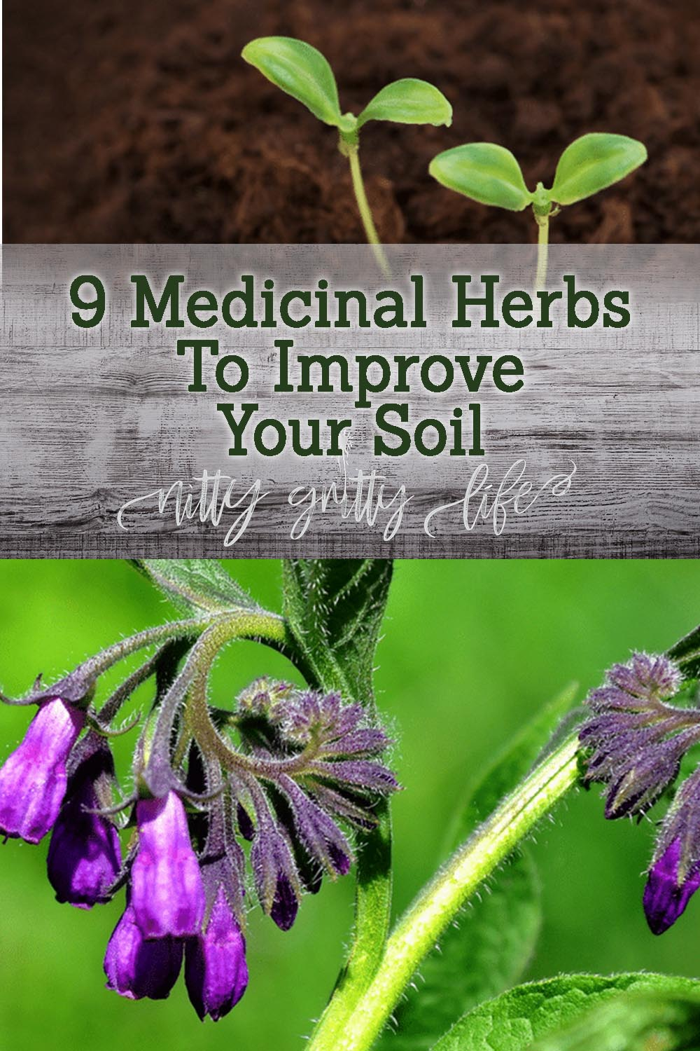 Herbs to Improve Your Soil