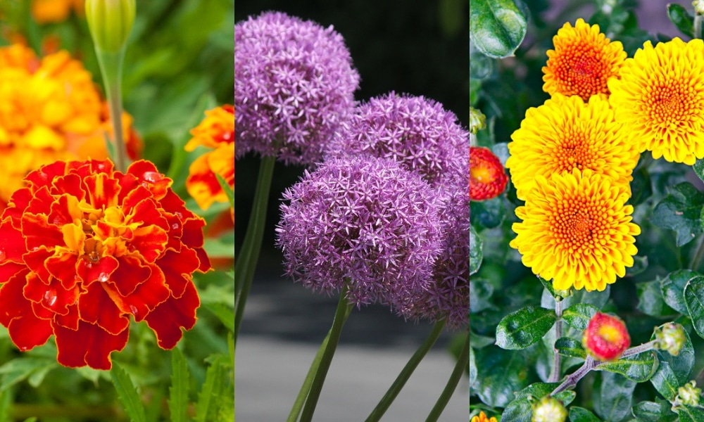 plants that repel bugs and other pests naturally