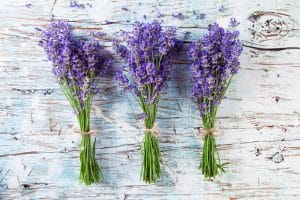 The health benefits of lavender are so profound making it a perfect addition to your home apothecary.