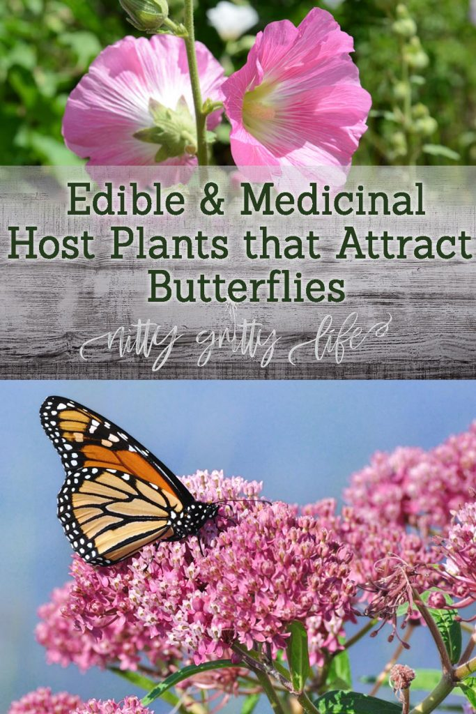host plants that attract butterflies pin