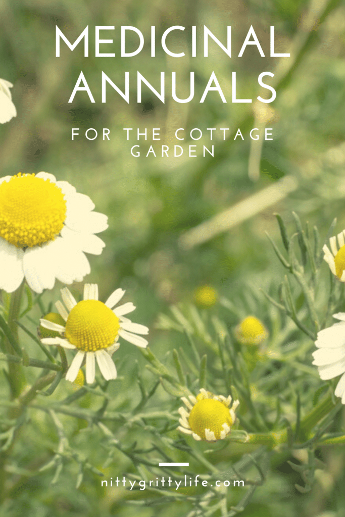medicinal annuals for the cottage garden pin